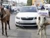Skoda Octavia Pulled By Donkeys India Customer Complaint