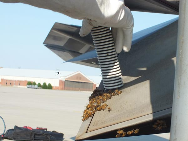Honey Bees Set Up Home In F-22 Raptor