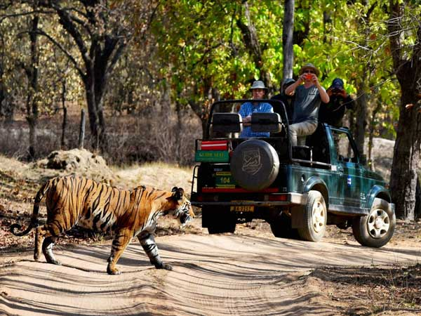 Lion Attacks Car At Bannerghatta National Park — Here's How It Can Be Avoided