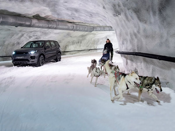 Land Rover Discovery Sport Vs Dog Sled Team