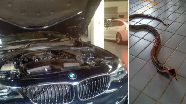 Cobra Gets In A BMW Car: Viral Video Shows The Snake Creating Panic In Tamil Nadu