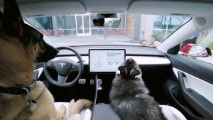 Tesla Dog Mode — Working Explained In Video