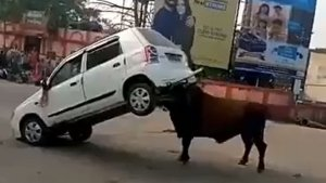 Angry Bull Attacks Maruti Suzuki Alto K10; Lifts The Car And Throws It With Ease