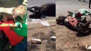Ducati Crash On Republic Day Ride Kills Rider And A Buffalo