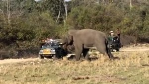 Maruti Gypsy Attacked By Elephant — Here Is Why The SUV Still Rules In Wildlife Sanctuaries