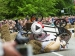Red Bull Soapbox Biggest Accidents From Netherlands